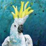 Sulphur Crested Cockatoo – Ltd ed print