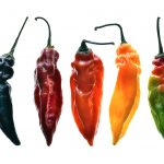 Chili Peppers ~ Food Still Life