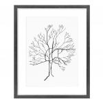 Australis Map Tree 1.1