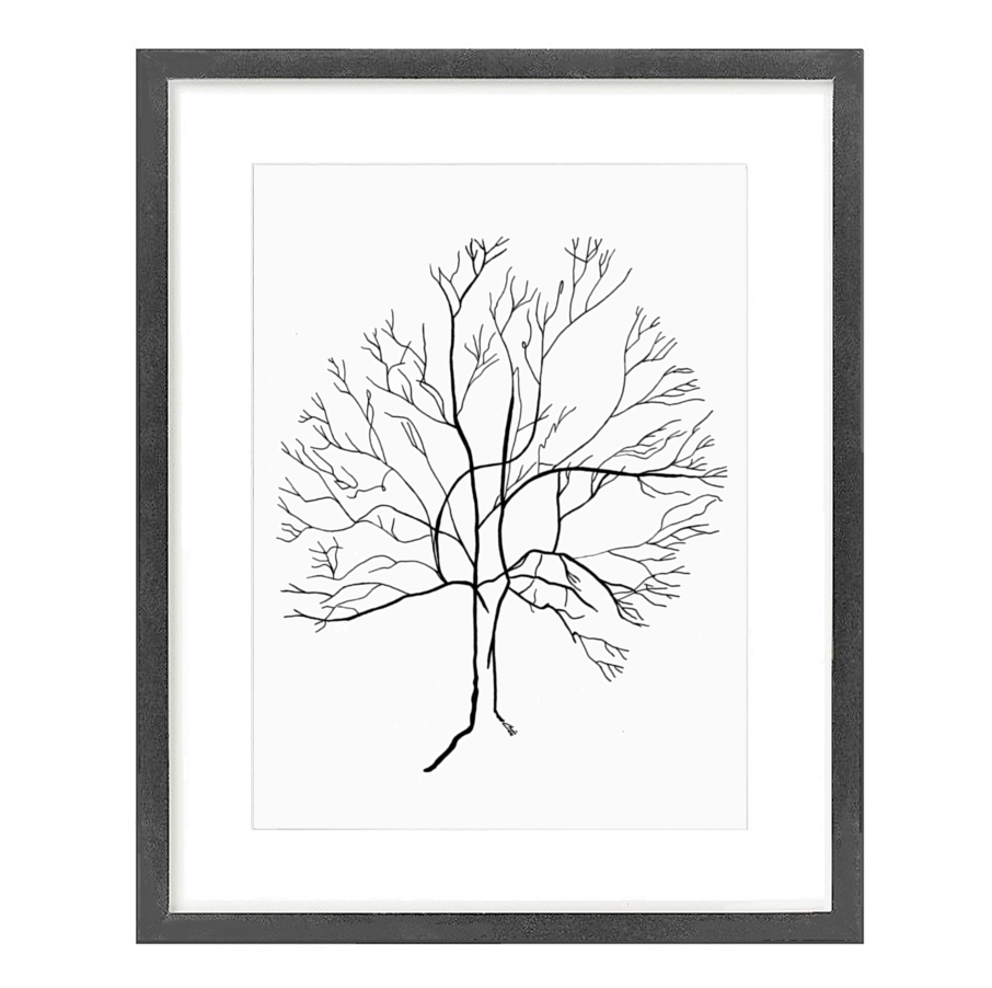 Australis Tree 1.1