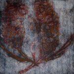 Banksia – 4 colour Ltd Ed Print