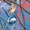 Burkes And White Winged Wrens Detail 3