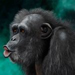 Pucker up sweetie chimpanzee portrait