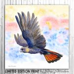 Glossy Black Cockatoo – Ltd Ed Canvas Print