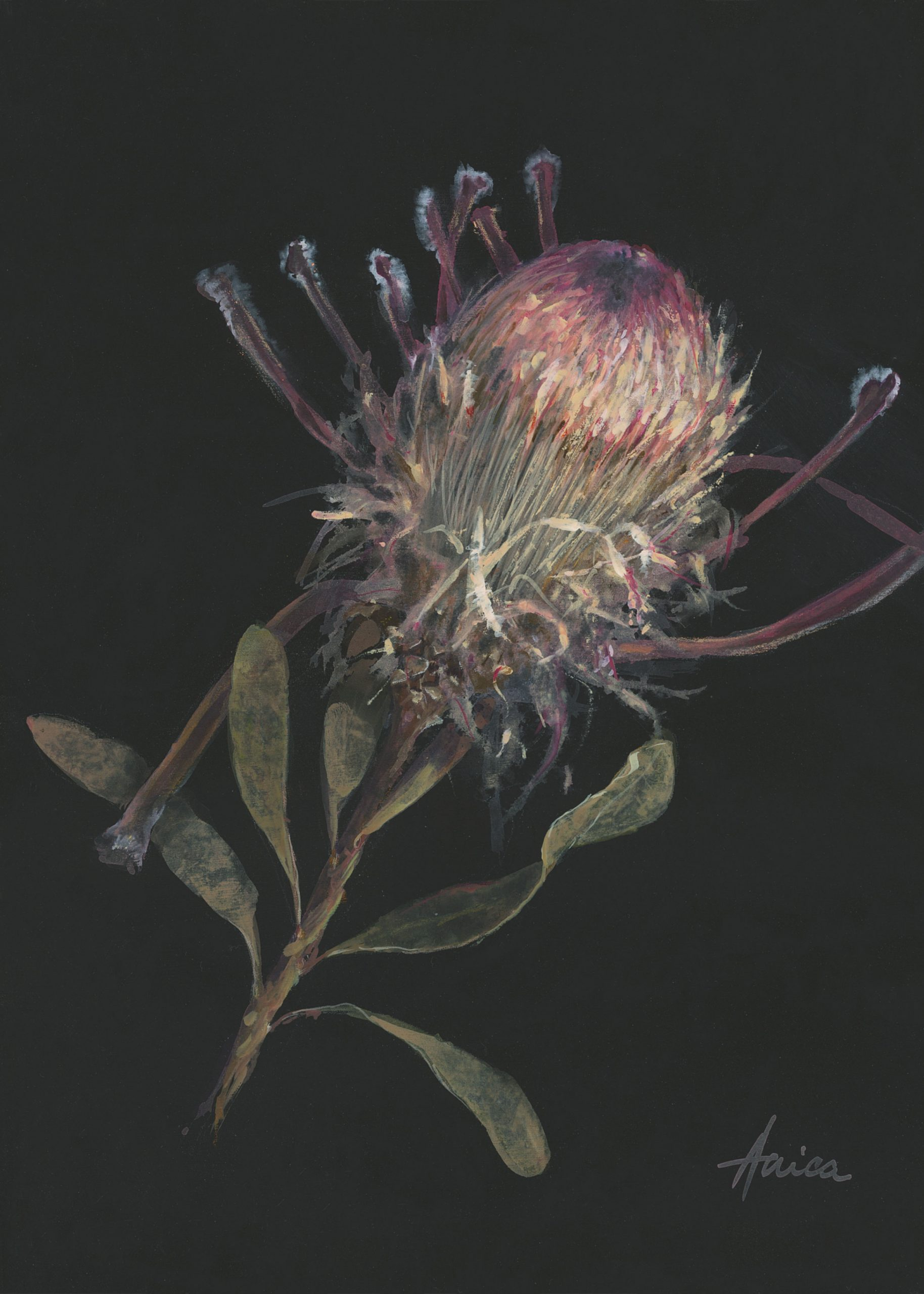 Inside Story Of An Ice Pink Protea