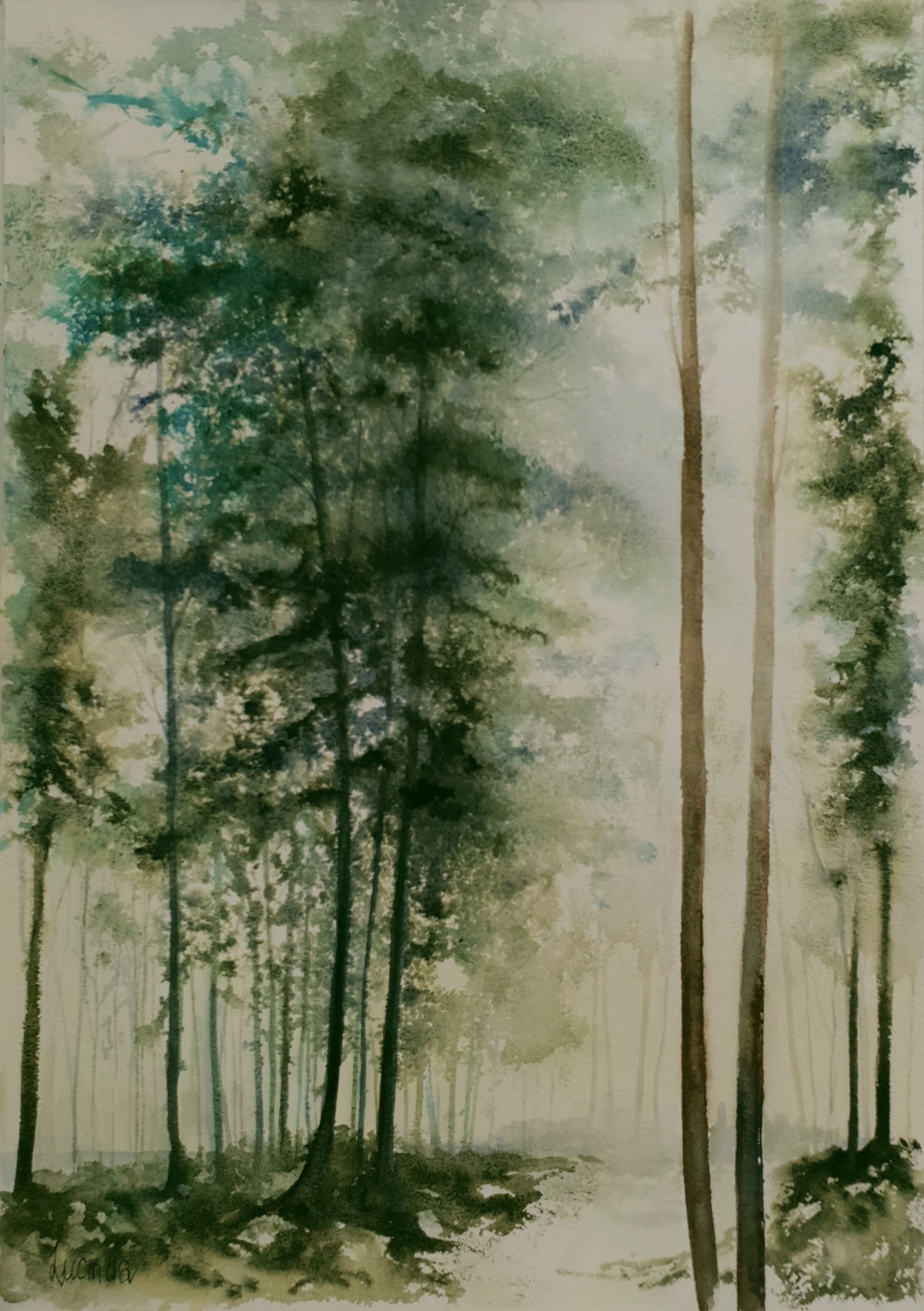 Lucinda Leveille The Old Forest