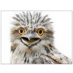 Rosie, Tawny Frogmouth Ltd Ed print