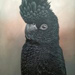 Elvis The Red Tailed Black Cockatoo Ltd Ed Print