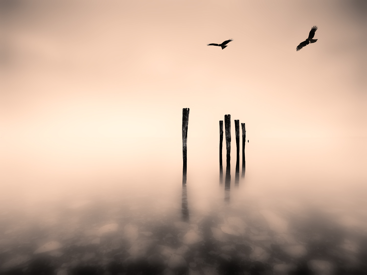Dreaming Jetty Pier Birds Fineart Nickpsomiadis Photography