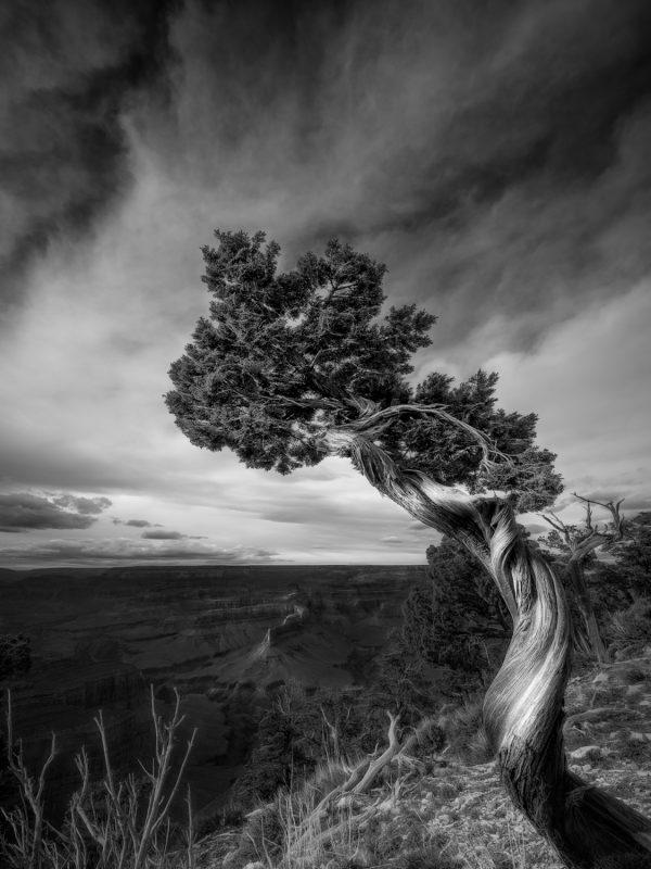South Rim Grand Canyon Nikart Photography