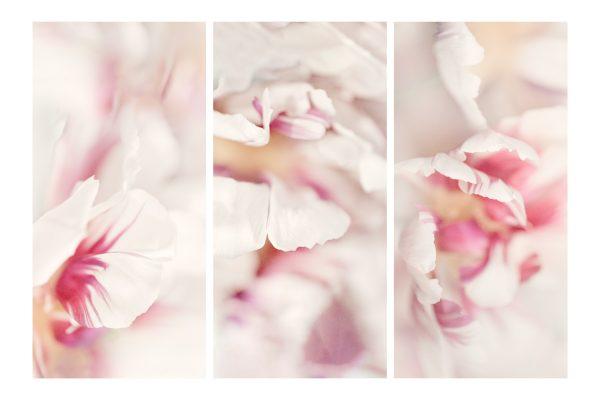 Tulip Detail Triptych