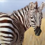 The Plains Zebra