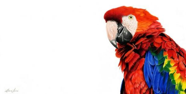 10 Scarlet Macaw