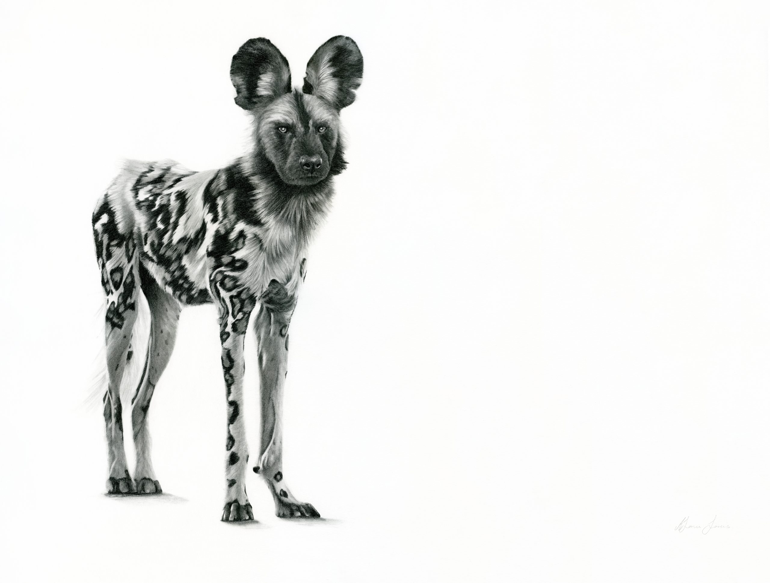 African Dog