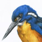 Kingfisher Ltd Ed Print