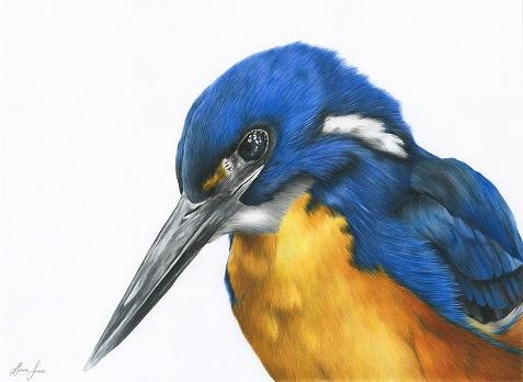 Azure Kingfisher Small