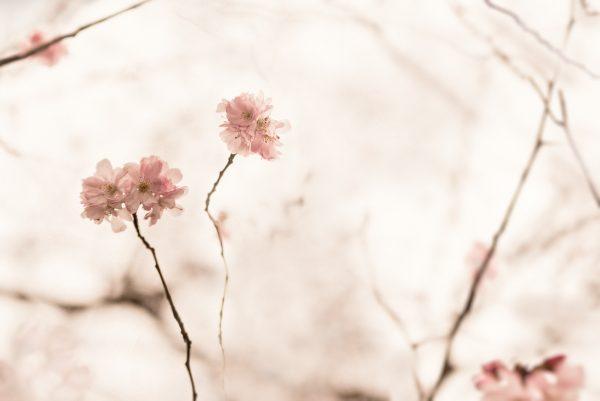 Blossom Waltz