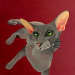 Gladys the Peterbald Cat