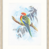 Eastern Rosella In Oyster Frame