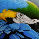 Blue and gold macaw Ltd Ed giclee print