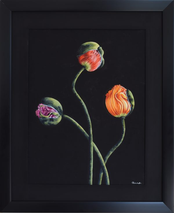 Poppies Ll