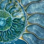 Blue Ammonite