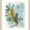 Coastal Banksia In Oyster Frame++