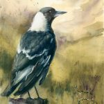 Magpie on a Country Post – Framed