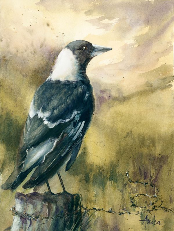 Magpie On A Country Post