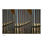 014 Organ Pipes