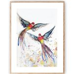 Rosellas Love in Flight
