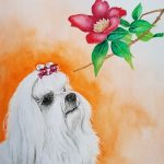 Maltese Dog and  Camellia Flowers