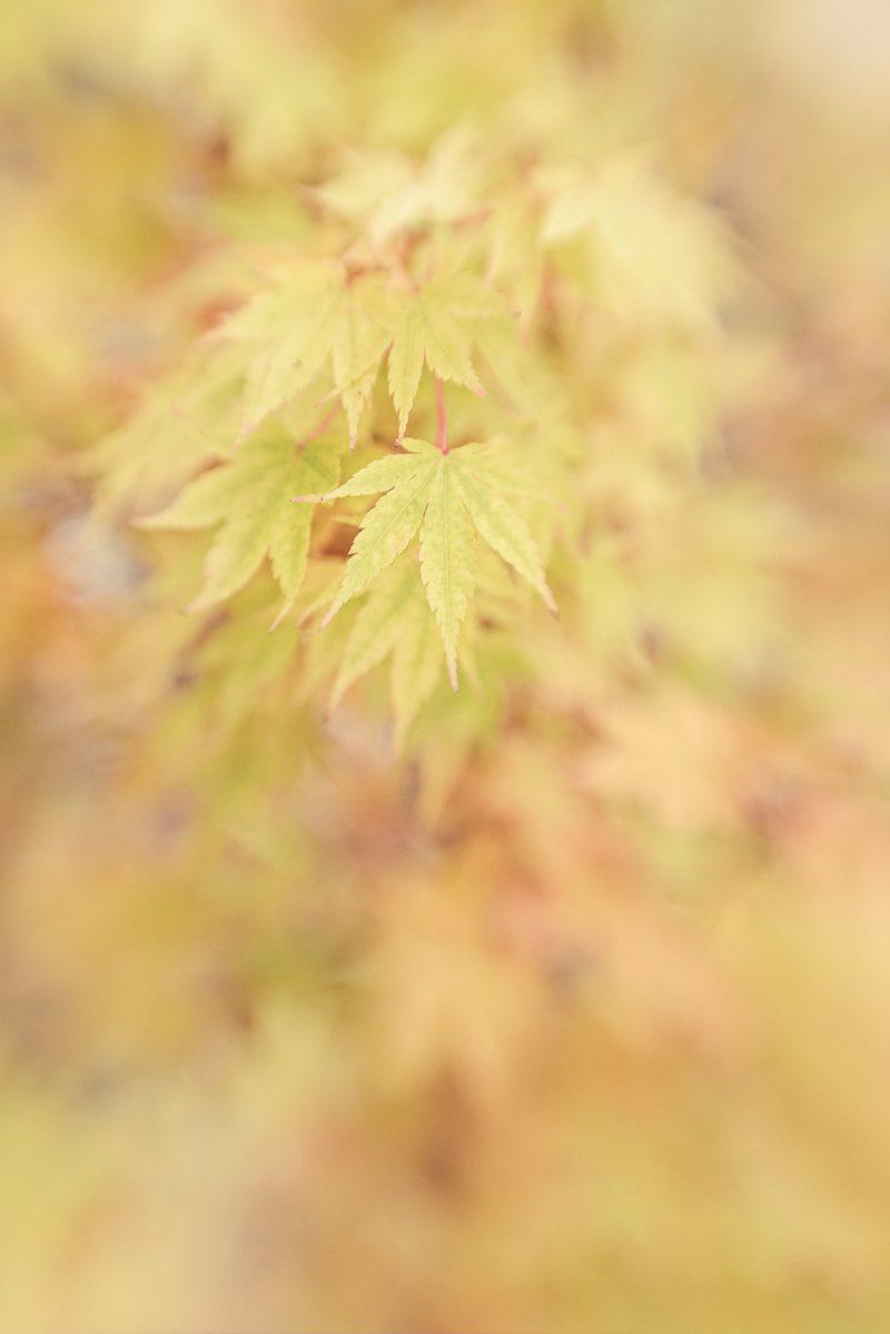 Autumn Gold 800x1199