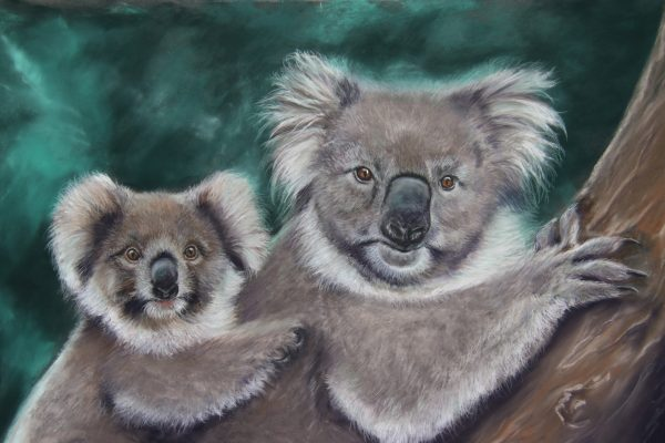 Deb Farrimond Koalas In Focus Survivors