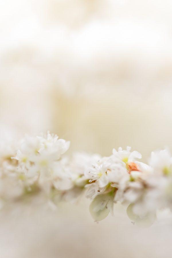 Gentle Bloom