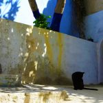 Black Cat Grooming, Chefchaouen, Morocco – Ltd Ed Print