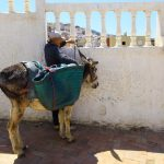 The Man and his Donkey, Moulay Idriss, Morocco – Ltd Ed Print