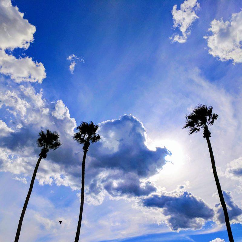 Palm Springs Skies 800x800