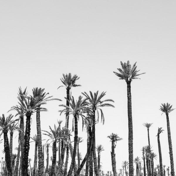 Palms Copy