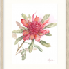 Waratah Number Two In Oyster Frame++