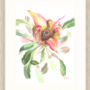 Waratah's Open Bud New In Oyster Frame
