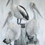 Pelicans – Sun Seekers