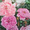 4.spring Back To Life Peonies