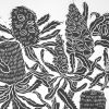 Banksia And Warratahs Detail 3