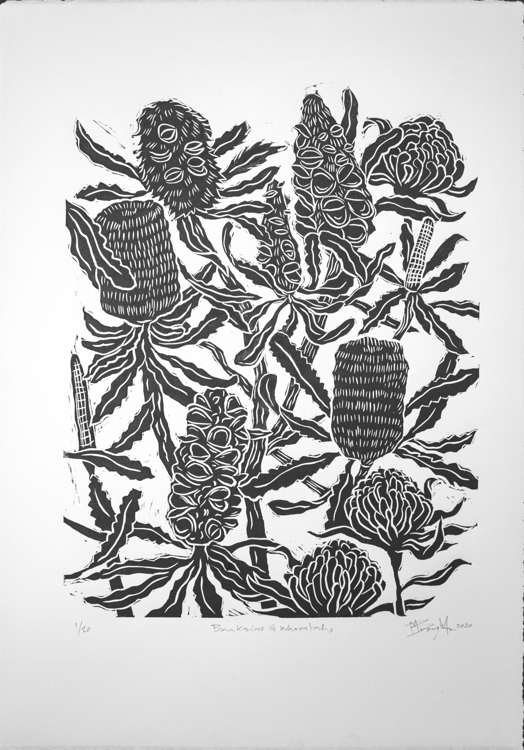 Banksia And Warratahs