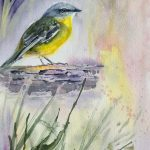 Eastern Yellow Robin – 1