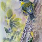 Eastern Yellow Robin – 2