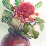 Waratah in a large red vase