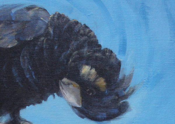 Blackcockatoo Debparkerdetail