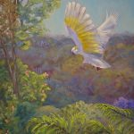 Sulphur crested cockatoo – Fly past at breakfast